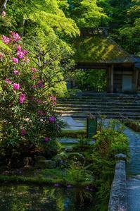 法然院~新緑・石楠花 - 鏡花水月