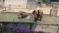 雁きり - ゾウは勘定にいれません2  to say no thing of the elephant