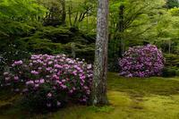 石楠花と春の花咲く三千院 - 花景色-K.W.C. PhotoBlog