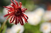 日焼け - さぬき風花