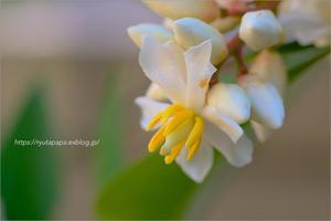 庭の小さな花 - りゅう太のあしあと
