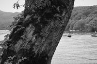釣果見守る湖岸の大樹 - フォトな日々