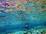 クサフグ 3   - 葉山の美味しいダイビング生活