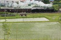 田んぼのある風景-C61 - 蒸気屋が贈る日々の写真-exciteVer