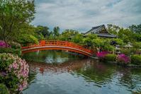 神泉苑~新緑・つつじ - 鏡花水月