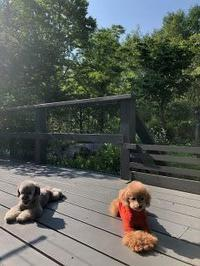 初夏の一日 - Fran とDomagkのガーデンライフ