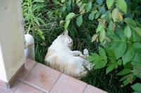 寝てるだけだよ - 猫と夕焼け