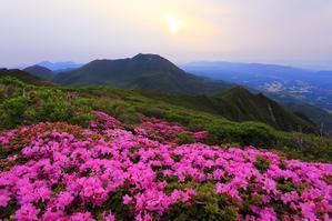 九重山 ミヤマキリシマ - 九重山行クラブ「四季祭 」