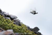 飛翔 - Digital Photo Diary