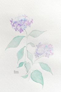 紫陽花 - fluff