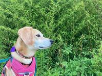 夏時間 - 犬と楽しむスローライフ