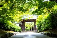 緑の参道 - お散歩写真