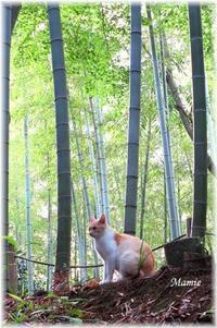 竹林の猫ちゃん達 - おだやかに たのしく Que Sera Sera