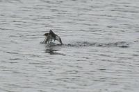 ツバメの水浴びⅠ - 風のささやき