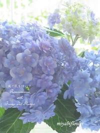 憧れて・・・紫陽花色に染まる - 風と花を紡いで