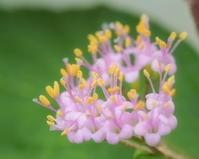 自宅周辺に咲く 2 - ty4834 四季の写真Ⅱ