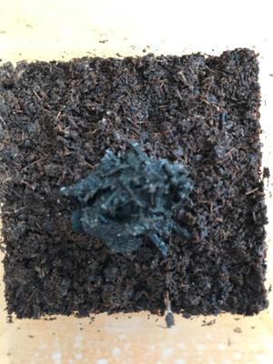 ヤコウタケ栽培43日目 さすがに諦めた - 情熱の重さは夜のウナギ