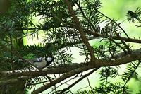 山の小鳥さんたち&自然 - 鳥と共に日々是好日③