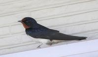動かない鳥たち - 黒猫瓦版