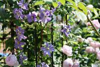 プリンスチャールズとセプタードアイル - my small garden~sugar plum~