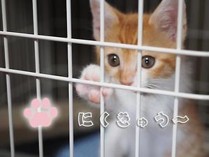 """【保護子猫""""みちくん""""成長記 3週間め】ピンクの肉球と白いお胸。 - SAMのLIFEキャンプブログ Doors , In & Out !"""