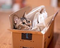 猫の仕事 - 猫と夕焼け