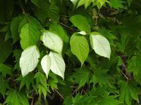 『行者の滝と周辺の植物達』 - 自然風の自然風だより