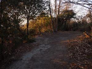 散歩道 -