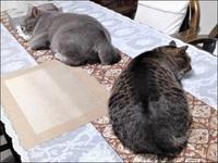 ディナーをご一緒に‥‥…&五輪に突き進んでいいのか! - クロのこと・そして猫たちのこと~猫と共に老いを生きる~