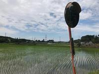 印旛沼周辺ライド - pottering