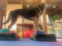 バランスエクササイズ - 犬と楽しむスローライフ