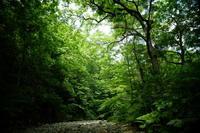 渓流 - 野に棲む日日