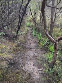 歩いています、雨の日も/ Walking Five Rain Or Shine - アメリカからニュージーランドへ