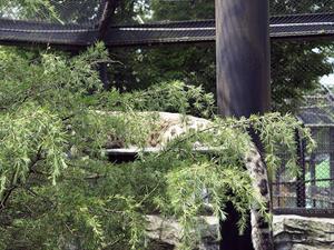 アサヒのしっぽ - 動物園放浪記