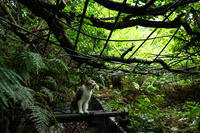 猫の遠吠え - 野良猫たちの風景
