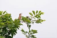 利根川の小鳥たち - 何でも写真館