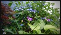 小さなお花とガブリエル前半戦 - どんぐりの木の下で……