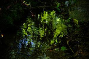 苔の森 -
