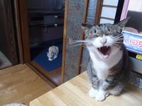 大豆田とわ子風猫観察 - 3色猫だんご+1