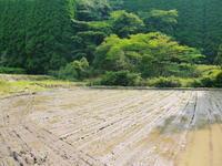 米作りの挑戦(2021)田植え6月9日に田植えを終えました!(後編:田植えと補植) - FLCパートナーズストア