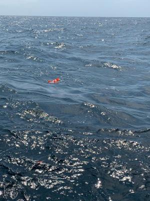 自己最大ベニアコウ ゲット‼️ - 漁師です・・・