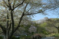 筑波山の桜 - 写真巡礼「日本の風景」
