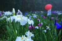 神楽女湖6月13日 - 九重山行クラブ「四季祭 」