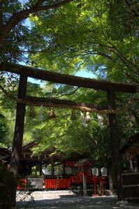 蒼い季節野宮神社 - 京都ときどき沖縄ところにより気まぐれ