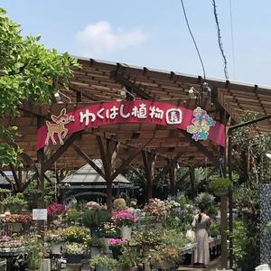 休憩を挟みながらの庭遊び!(^^)!(⌒∇⌒) - ♪ 路地裏の 小さな庭と雑貨屋♪♪♪