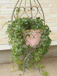 Green葉物の癒し - グリママの花日記