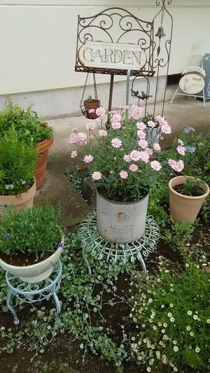 今朝の庭 -
