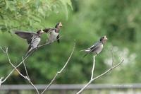 20210614 小雨降る - 鳥撮り散歩