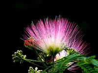 梅雨入り、ある利用券、梅雨時の花 - しらこばとWeblog