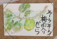 梅の実 - 三日坊主
